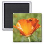 Ladybug on Poppy Magnet
