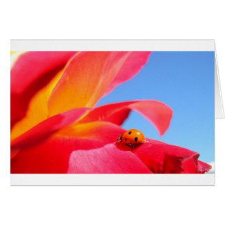 Ladybug on Rose Card