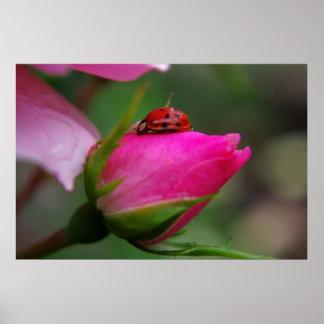 Ladybug on rose print