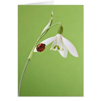 Ladybug on snowdrop card