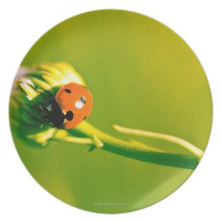Ladybug on sprig melamine plate