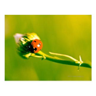 Ladybug on sprig postcard