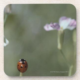 Ladybug on Stem Drink Coaster