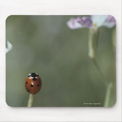 Ladybug on Stem Mouse Pad