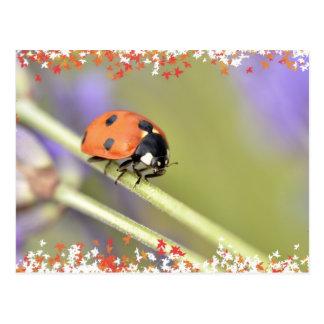 Ladybug on stem of lavender flower postcard