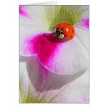 Ladybug on the petunia Greeting Card