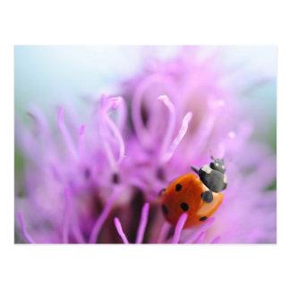 Ladybug on the purple flower card postcard