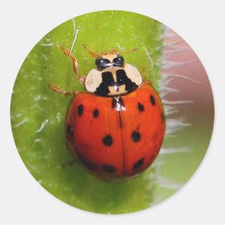 Ladybug on the Sunflower Stalk Classic Round Sticker