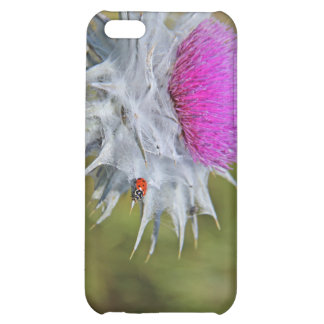 Ladybug on thistle thorn. iPhone 5C cover