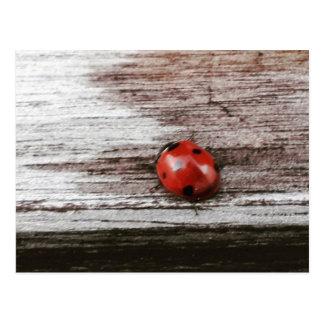 Ladybug on wet wood postcard