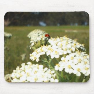 Ladybug on white wildflowers mousepad