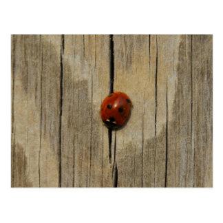 Ladybug on wood postcard