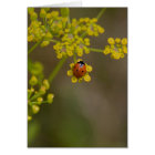 Ladybug on yellow flower card