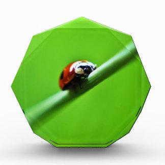 Ladybug photo award