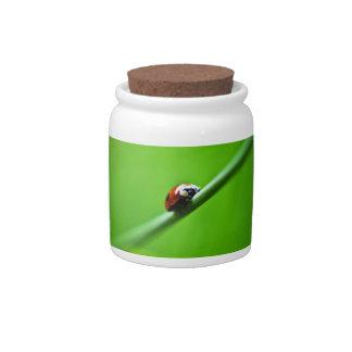 Ladybug photo candy jars