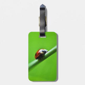Ladybug photo tags for bags