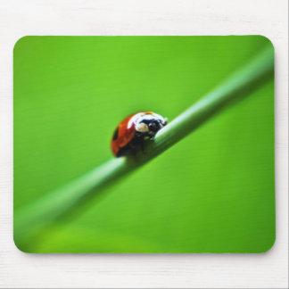 Ladybug photo mouse pad