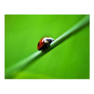Ladybug photo postcard
