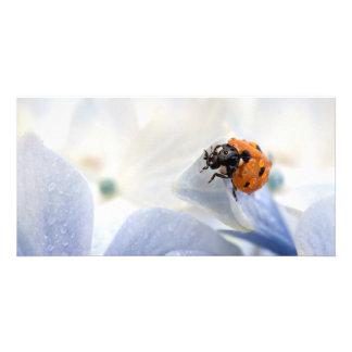 Ladybug Photo Card