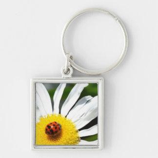 Ladybug Photography Keychain
