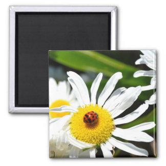 Ladybug Photography Fridge Magnet