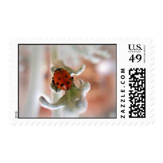 Ladybug Postage