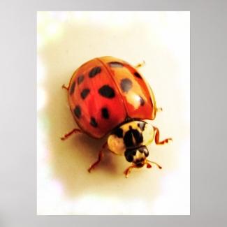 Ladybug Poster
