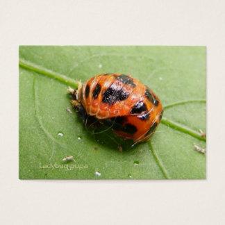 Ladybug Pupa calendar ~ Chubby Business Card