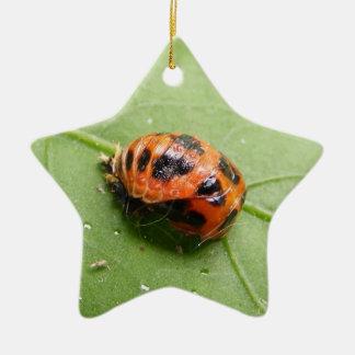 Ladybug Pupa ~ ornament