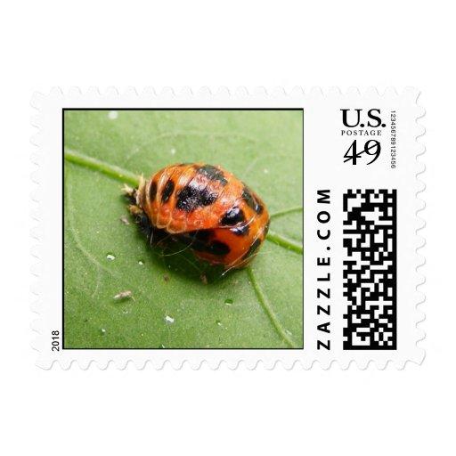 Ladybug Pupa ~ stamp