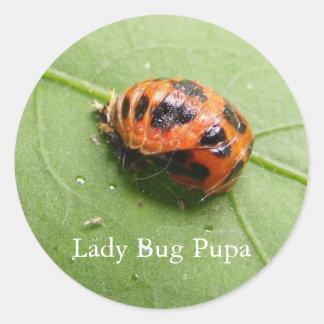 Ladybug Pupa ~ sticker