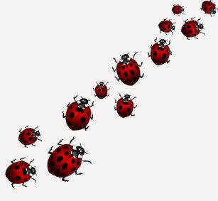 Ladybug Clothing | Zazzle