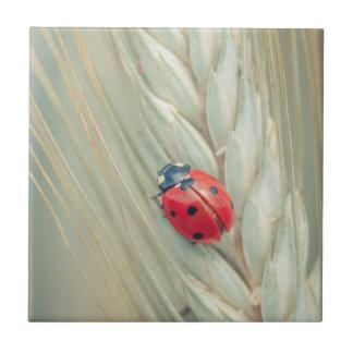 Ladybug Small Square Tile
