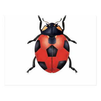 Ladybug soccer postcard