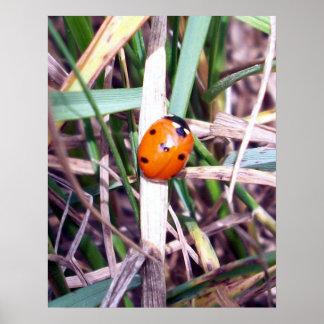 Ladybug Spotlight Poster