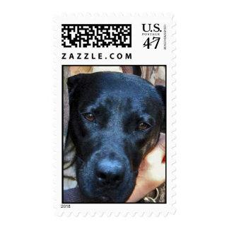 Ladybug Stamp
