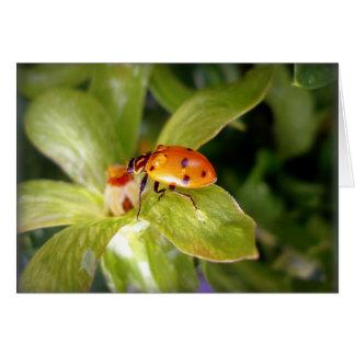 Ladybug Stationery Note Card