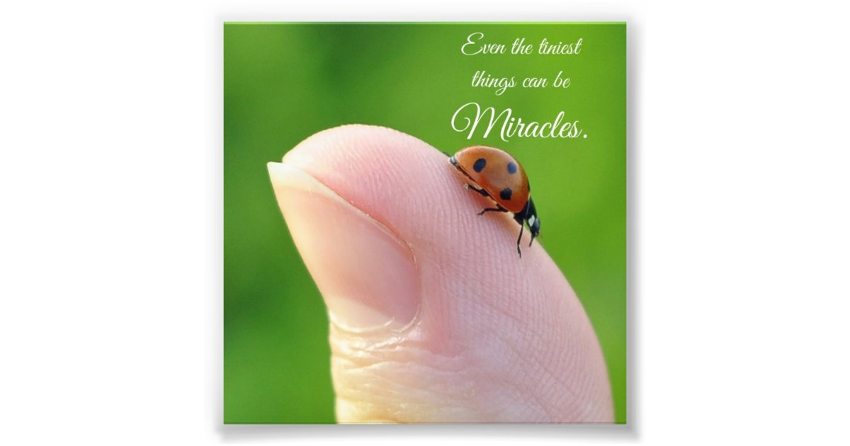 Ladybug Tiny Miracles Quote Square Photo Print Zazzle Com
