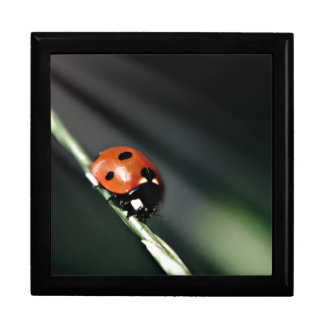 Ladybug wooden keepsake jewelry gift box