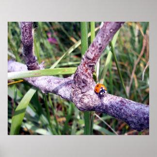 Ladybug World Poster