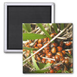 Ladybugs (Coccinellidae) 2 Inch Square Magnet