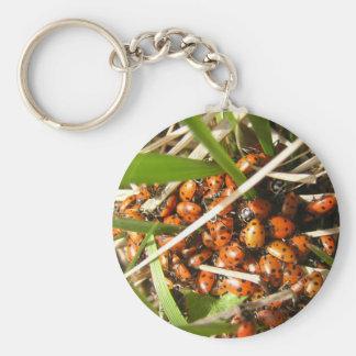 Ladybugs Coccinellidae Key Chains