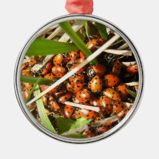 Ladybugs (Coccinellidae) Metal Ornament