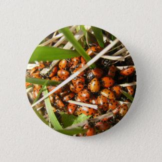 Ladybugs (Coccinellidae) Pinback Button