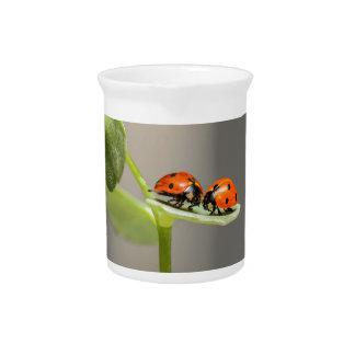 ladybugs drink pitcher
