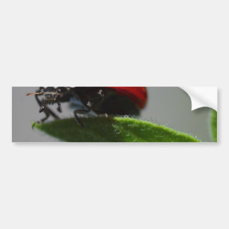 Ladybugs Insects Bumper Sticker