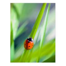 LadyBug's Journey Postcard