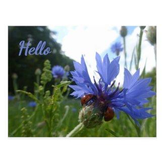 Ladybugs Meeting on Cornflower HELLO Postcard