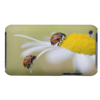 Ladybugs on an oxeye daisy, Biei, Hokkaido, Barely There iPod Cover