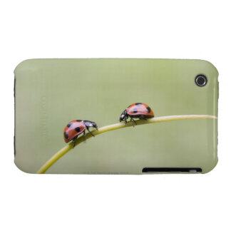 Ladybugs on stem, Biei, Hokkaido, Japan Case-Mate iPhone 3 Case
